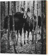 Gathering Of Moose Wood Print by Bob Orsillo