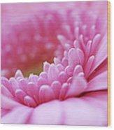 Gerbera Daisy Flower - Pink Wood Print by Natalie Kinnear