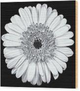 Gerbera Daisy Monochrome Wood Print by Adam Romanowicz