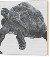 Giant Tortoise Wood Print by Lucy D