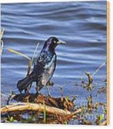 Glorious Grackle Wood Print by Al Powell Photography USA