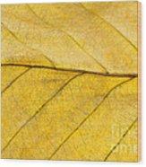 Golden Beech Leaf Wood Print by Anne Gilbert
