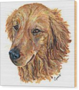 Golden Retriever Wood Print by Barb Capeletti