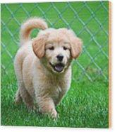 Golden Retriever Puppy Wood Print by Christina Rollo