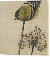 Goldfinch Wood Print by Lori  McNee