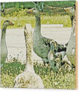 Goose Chat Wood Print by Artist and Photographer Laura Wrede