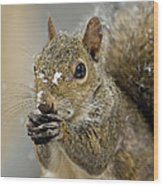 Gray Squirrel - D008392  Wood Print by Daniel Dempster