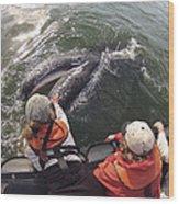 Gray Whale Calf And Tourists Baja Wood Print by Flip Nicklin