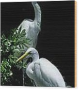 Great Egret Pair Wood Print by Skip Willits