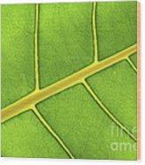 Green Leaf Close Up Wood Print by Elena Elisseeva