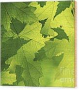 Green Maple Leaves Wood Print by Elena Elisseeva
