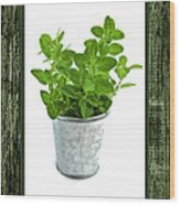 Green Oregano Herb In Small Pot Wood Print by Elena Elisseeva