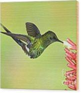 Green Thorntail Hummingbird Wood Print by Anthony Mercieca