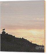 Gull At Dusk Wood Print by Anne Gilbert