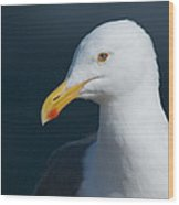 Gull Watcher Wood Print by Bob Smithing