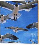 Gulls In Flight Wood Print by Geoge Ranalli