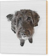 Hairy Dog Photographic Caricature Wood Print by Natalie Kinnear