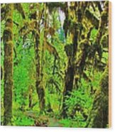 Hall Of Moss Wood Print by Benjamin Yeager