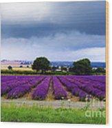 Hampshire Lavender Field Wood Print by Terri Waters
