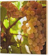 Harvest Time. Sunny Grapes IIi Wood Print by Jenny Rainbow