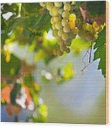 Harvest Time. Sunny Grapes V Wood Print by Jenny Rainbow