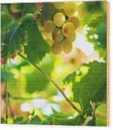 Harvest Time. Sunny Grapes Vii Wood Print by Jenny Rainbow