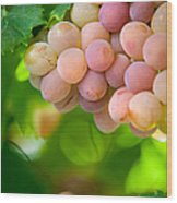 Harvest Time. Sunny Grapes Viii Wood Print by Jenny Rainbow
