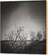 Hedgerow Wood Print by Dave Bowman
