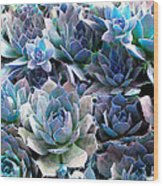 Hens And Chicks Series - Evening Light Wood Print by Moon Stumpp