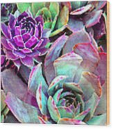 Hens And Chicks Series - Urban Rose Wood Print by Moon Stumpp
