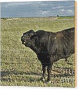 Hereford Bull Wood Print by Mark Newman