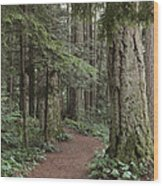 Heritage Forest Wood Print by Randy Hall