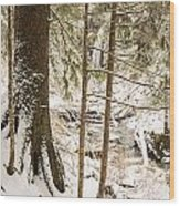Hiding In The Trees Wood Print by Tim Grams