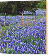 Hill Country Heaven - Texas Bluebonnets Wildflowers Landscape Fence Flowers Wood Print by Jon Holiday