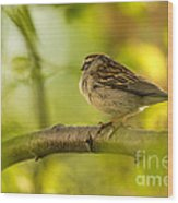 His Eye Is On The Sparrow Wood Print by Lois Bryan