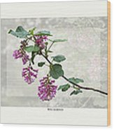 Ribes Sanguineum - California Currant Wood Print by Saxon Holt