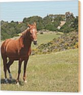 Horse Hill Mill Valley California 5d22679 Wood Print by Wingsdomain Art and Photography