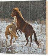 Horses At Play - 10dec5690b Wood Print by Paul Lyndon Phillips