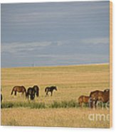 Horses In Saskatchewan Wood Print by Mark Newman
