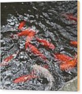 Hot Orange Carp Fish Wood Print by Linda Phelps