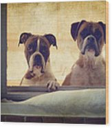 How Much Is That Doggie In The Window? Wood Print by Stephanie McDowell