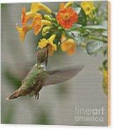 Hummingbird Sips Nectar Wood Print by Heiko Koehrer-Wagner