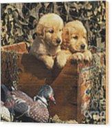 Hunting Buddies - Fs000130 Wood Print by Daniel Dempster