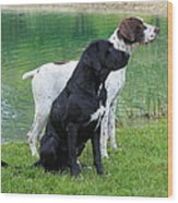 Hunting Dogs 1 Wood Print by Rachel Munoz Striggow
