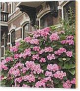 Hydrangeas In Holland Wood Print by Carol Groenen