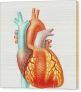 Illustration Of The Human Heart Wood Print by Carlyn Iverson