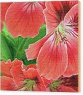 In The Garden. Geranium Wood Print by Ben and Raisa Gertsberg