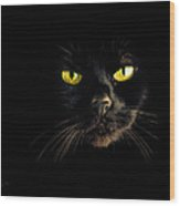 In The Shadows One Black Cat Wood Print by Bob Orsillo
