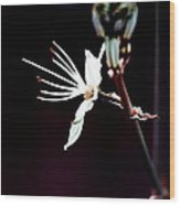 infrared Asphodel Wood Print by Stelios Kleanthous