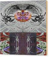Inspiring Trust Spider - Spirit 2013 Wood Print by James Warren
